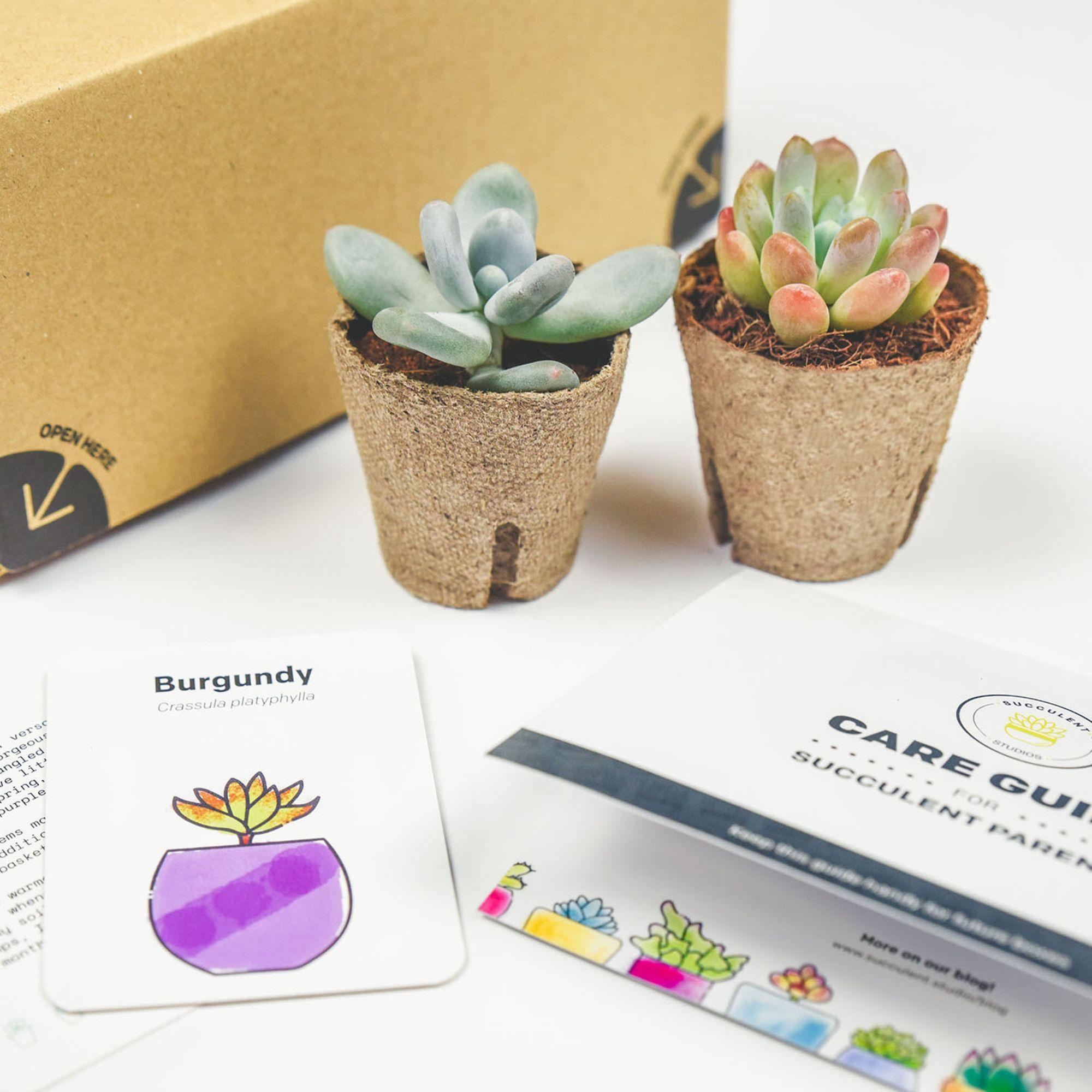 """image 11 Great Subscription Boxes That Offer Deep """"First Box"""" Discounts"""