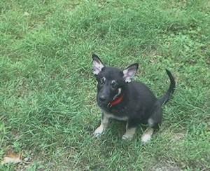 Tasha Puppy