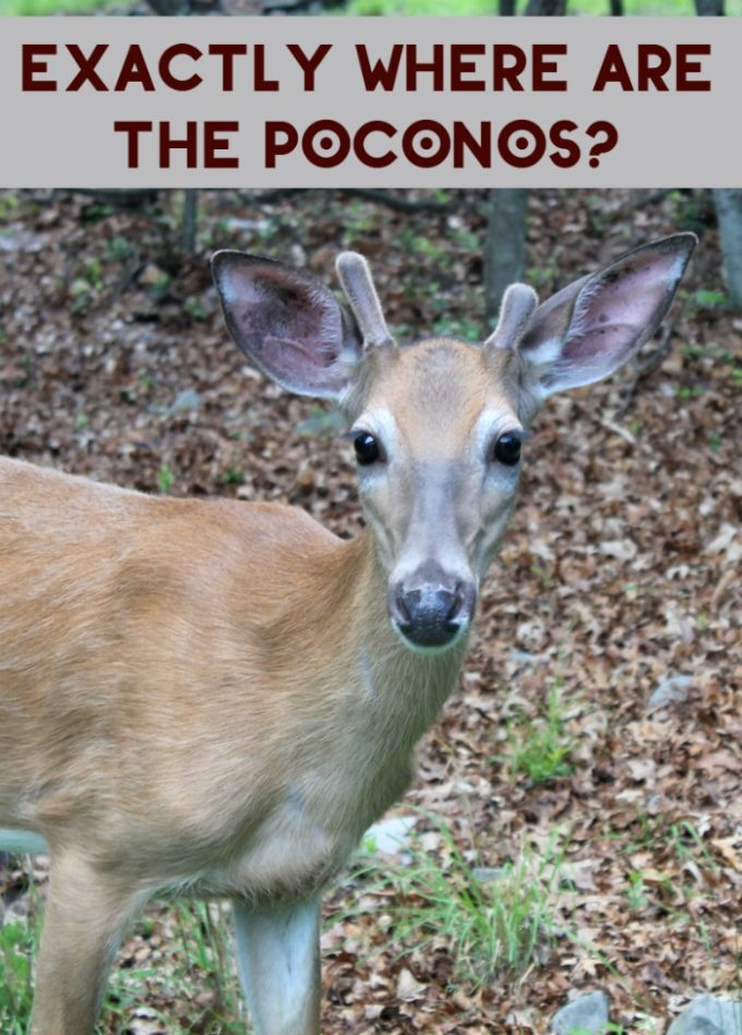 The Poconos are a huge draw for people who love to ski or want to get away from city life, but where exactly are they? Find out more about the Pocono Mountains!