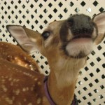 Wordless Wednesday: Cute Baby Deer