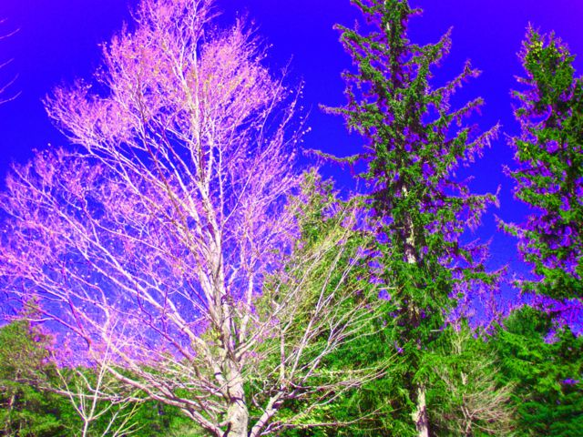 Red Skies and Magenta Trees: Messing With Nature in PhotoShop