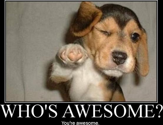 Happy International Day of Awesomeness!