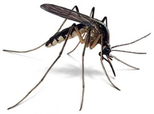mosquito Tips for a Painless Summer: Home Remedies for Battling Bugs, Burns, and More