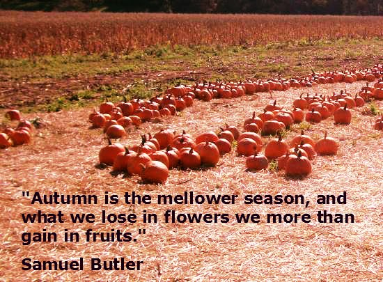 100 1699 9 Welcome, Autumn: Quotes About My Favorite Season