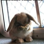 Silly Saturday: The Lament of Little Bunny FooFoo