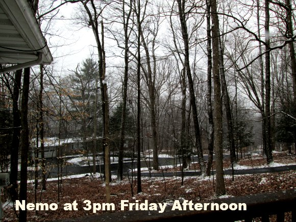 Nemo at 3pm Friday