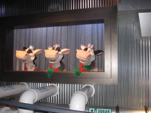 Hershey Cows