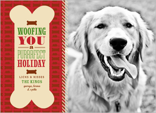 Shutterfly Holiday Cards