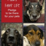 Take the Paws 4 Life Pledge and Be There for Your Pets