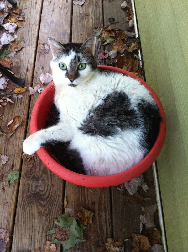 Prue in Flower Pot