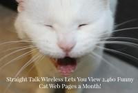 Straight Talk Wireless Cat