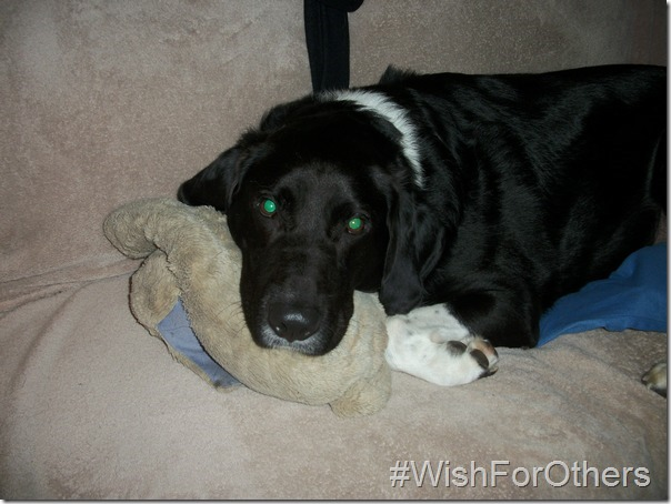 Our #WishForOthers: A Warm & Loving Home for Every Animal