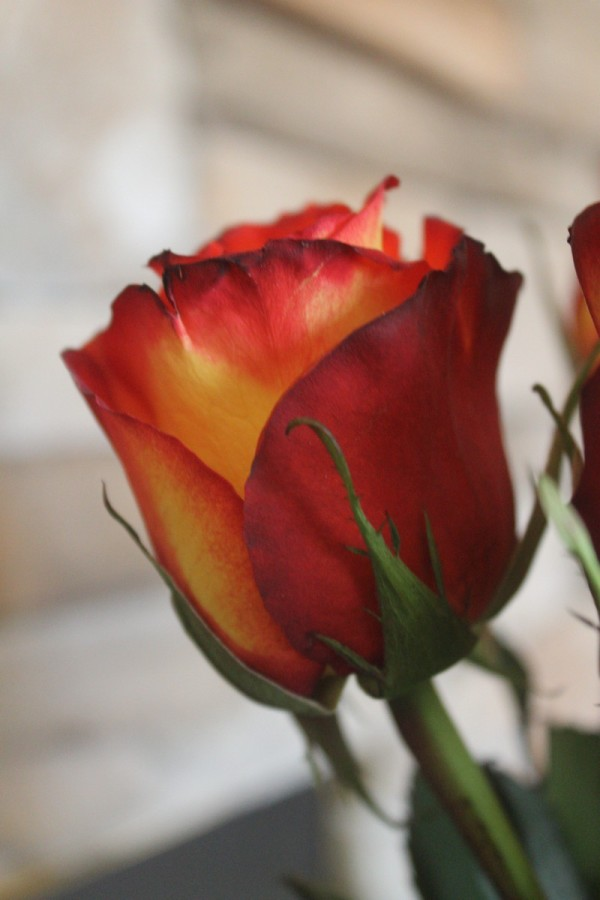 Looking for stunning Valentine's Day flowers that go beyond basic bouquets? You have to check out Bouqs! Their gorgeous flowers are sent from a Volcano!