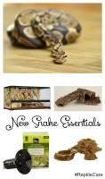New Snake Essentials