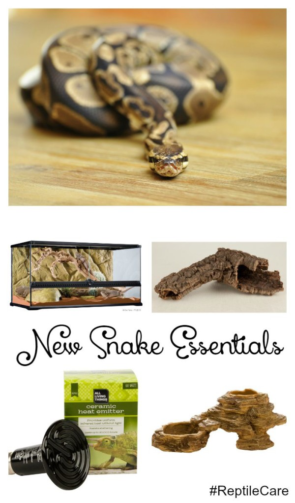 What Do You Need to Know Before Bringing Home a Reptile? Check out these new snake essentials! #ReptileCare