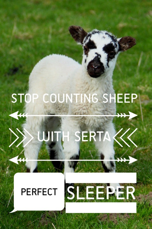 Stop Counting Sheep Serta Perfect Sleeper