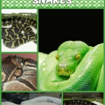 Things About Snakes