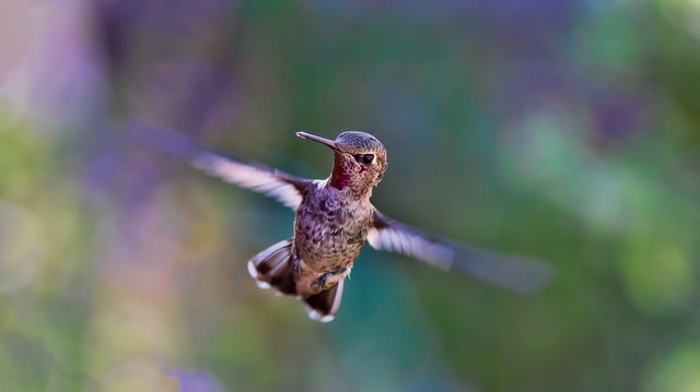 100+ Writing Prompts & Blog Post Ideas for September: Hummingbird Celebration