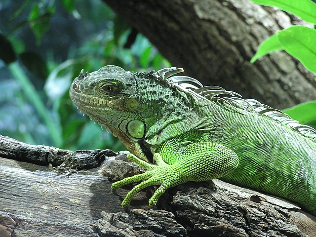 100+ Writing Prompts & Blog Post Ideas for September: Iguana Awareness Day