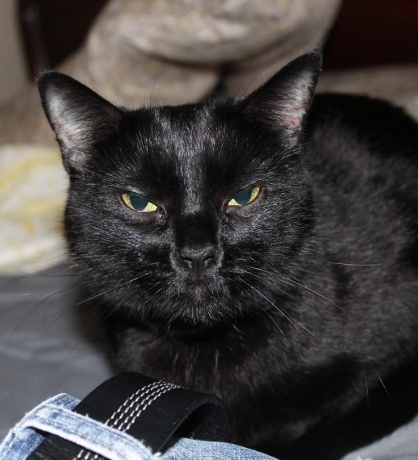 Penelope PetSmart