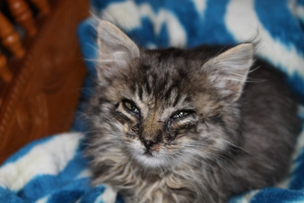 Help Morris the Cat Give Back to Hungry Kitties!