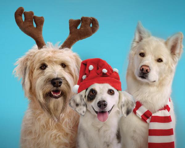 Christmas with your dog 2