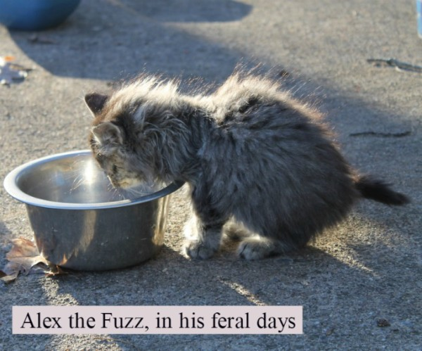 Little Alex the Fuzz in his feral days, because he moved inside.