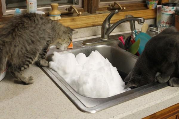 Cats Snow
