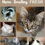 "My Secret ""Step"" to Keeping My Multi-Cat Home FRESH? #FreshStepFebreze!"