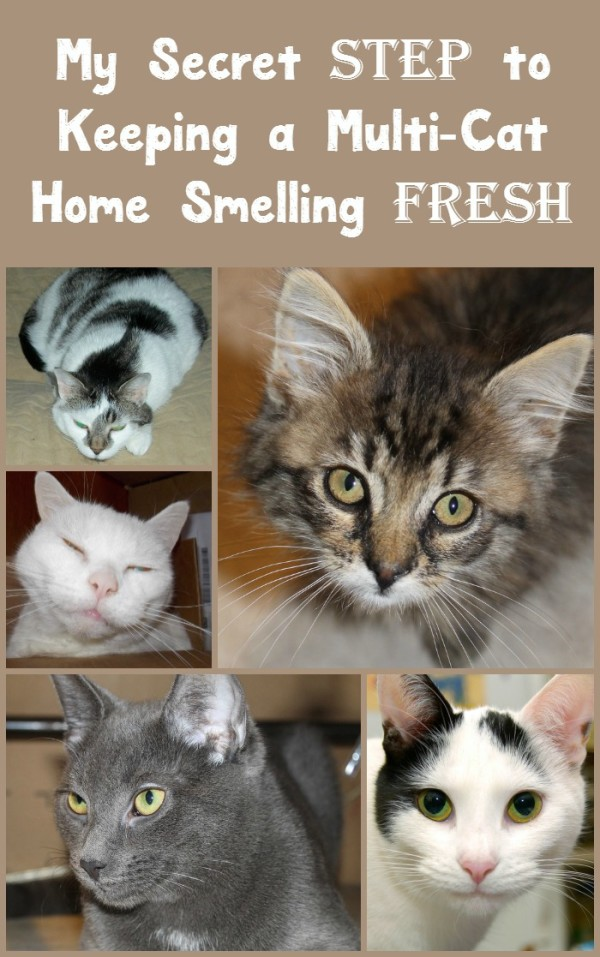 "What's my secret ""step"" to keeping my multi-cat home smelling FRESH day after day? New Fresh Step with the power of Febreze! Check out my review, plus hear about more antics from Alex the Fuzz and his adopted sister Zoe!"