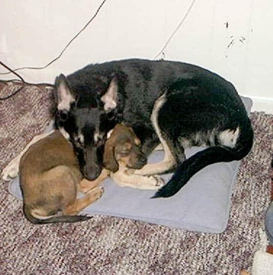 Puppy Love: Tasha and Maia