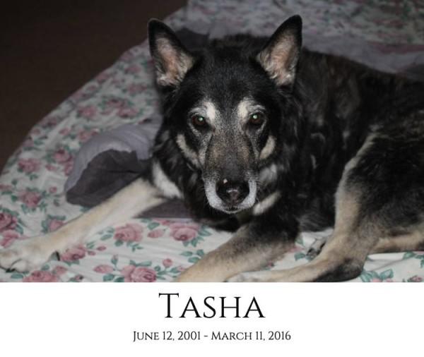 Tasha Memorial Photo