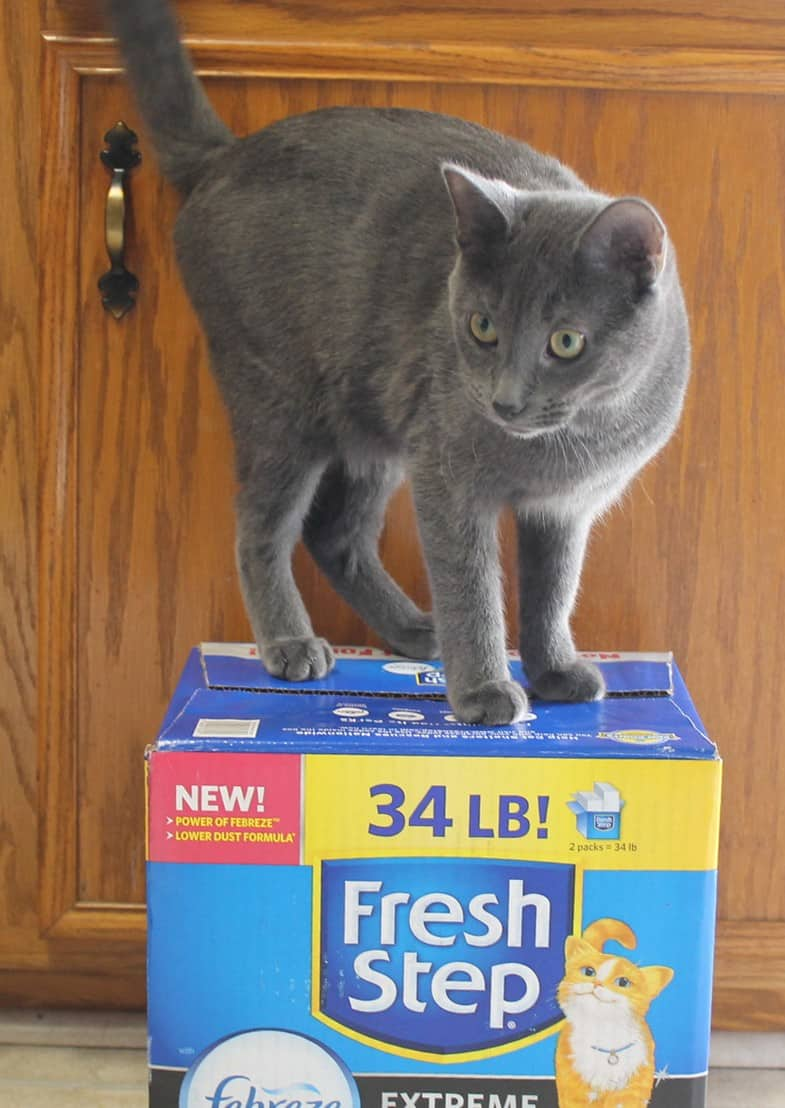 A Truly #Unsmellable Litter at a Reasonable Cost: #FreshStep Deals at Target!