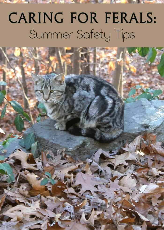 Caring for feral cats? Check out tips to help keep them safe during the hot summer months!