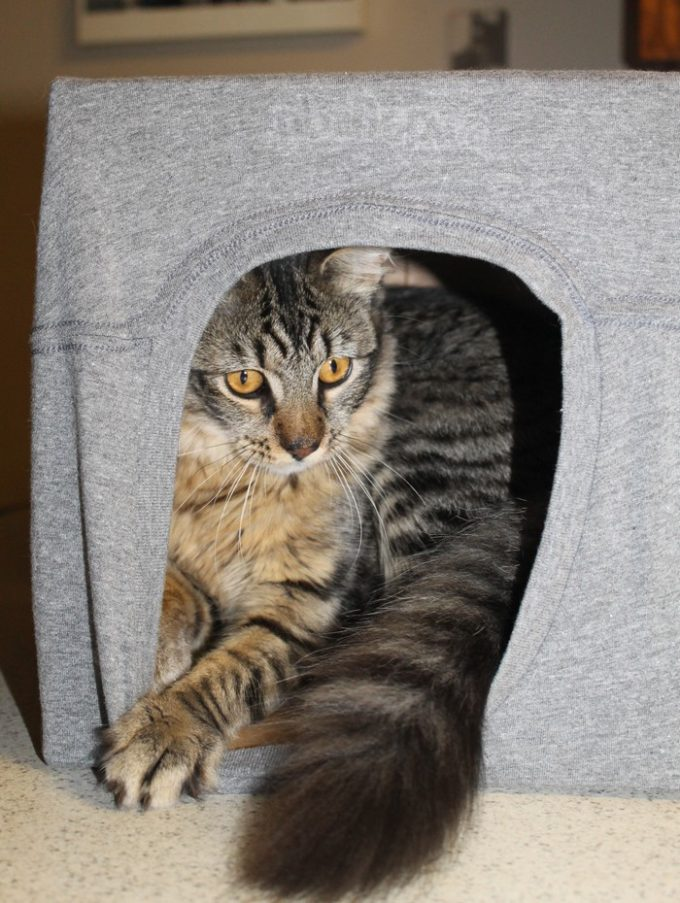 Make a Patriotic Cat Cave for your kitty with Tipsy Elves and help cats in need! Alex the Fuzz loves his caves. Check him out!