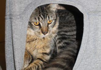 Cat Cave Featured