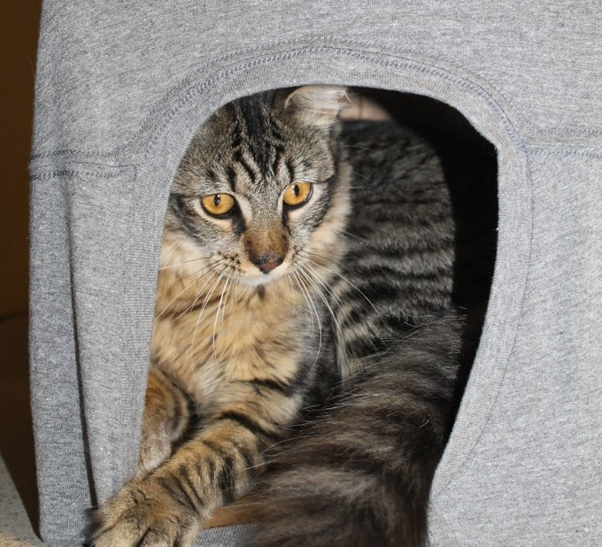 Make a Patriotic Cat Cave & Help Cats in Need #CatsForFreedom