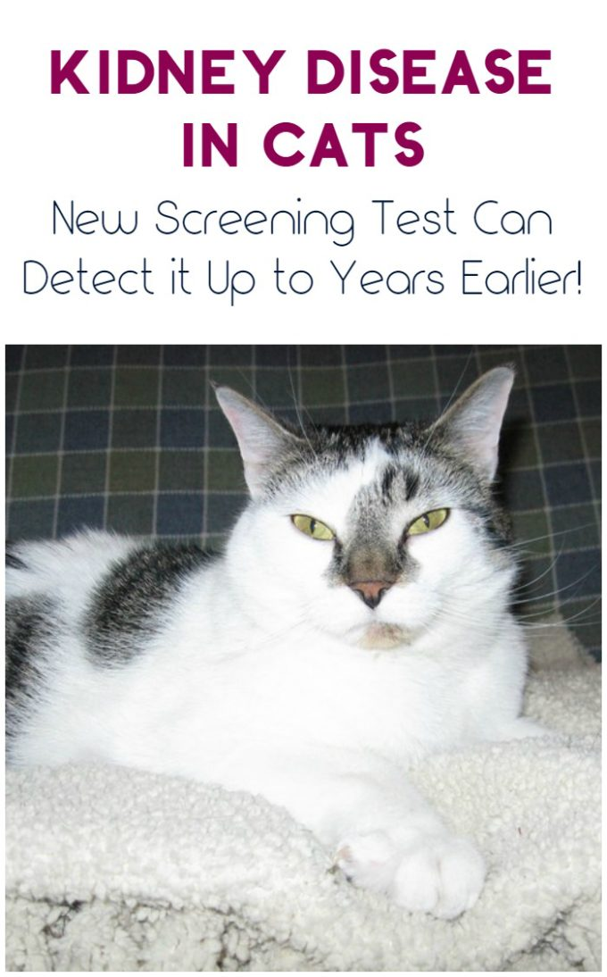 New Screening Test Can Catch Kidney Disease in Cats Up to Years Earlier #AskYourVet