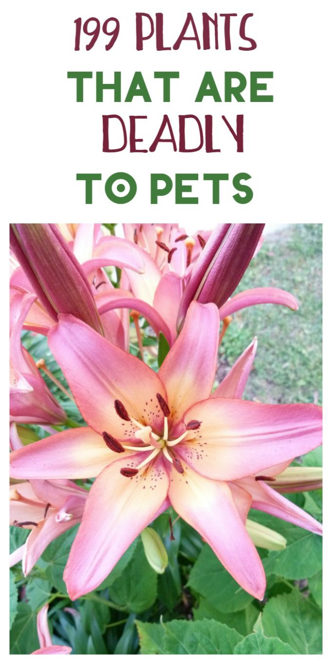 199 Poisonous Plants to Keep Away from Your Pets