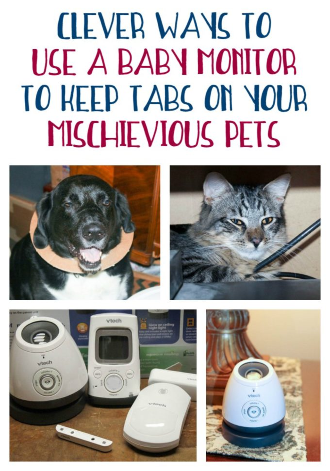 Did you know that baby monitors aren't just for monitoring brand new babies? They're also brilliant tools for keeping tabs on your furkids!