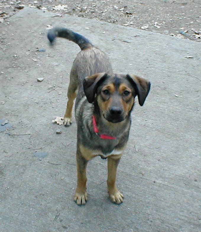 Maia as a puppy