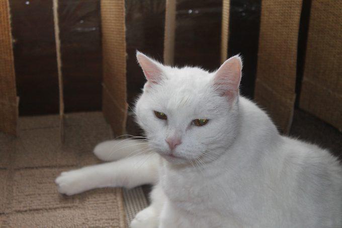 IDEXX SMDA MAL 4 Half of My Life, I Had a Cat Named Malkav