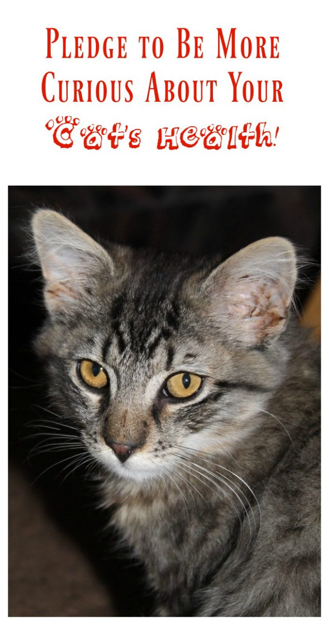 Pledge to Become More Curious About Your Cat's Health #Cat2VetDay