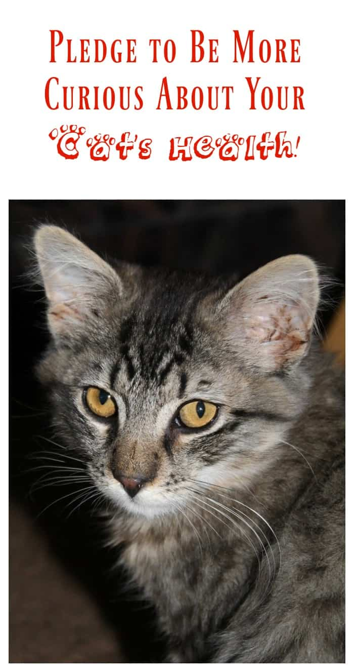 It's time to get more curious about your cat's health! Take the