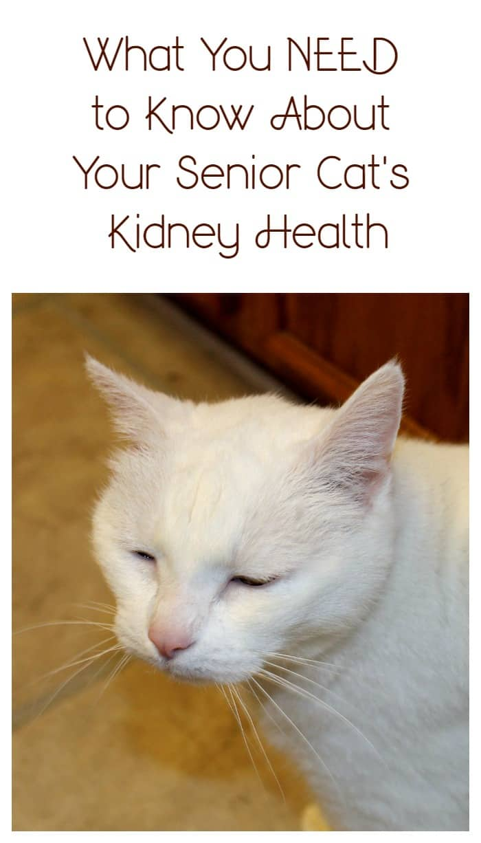 Half of all senior cats develop kidney disease. Ask your vet about the IDEXX SDMA screening test and catch it before it gets out of control! #askyourvet