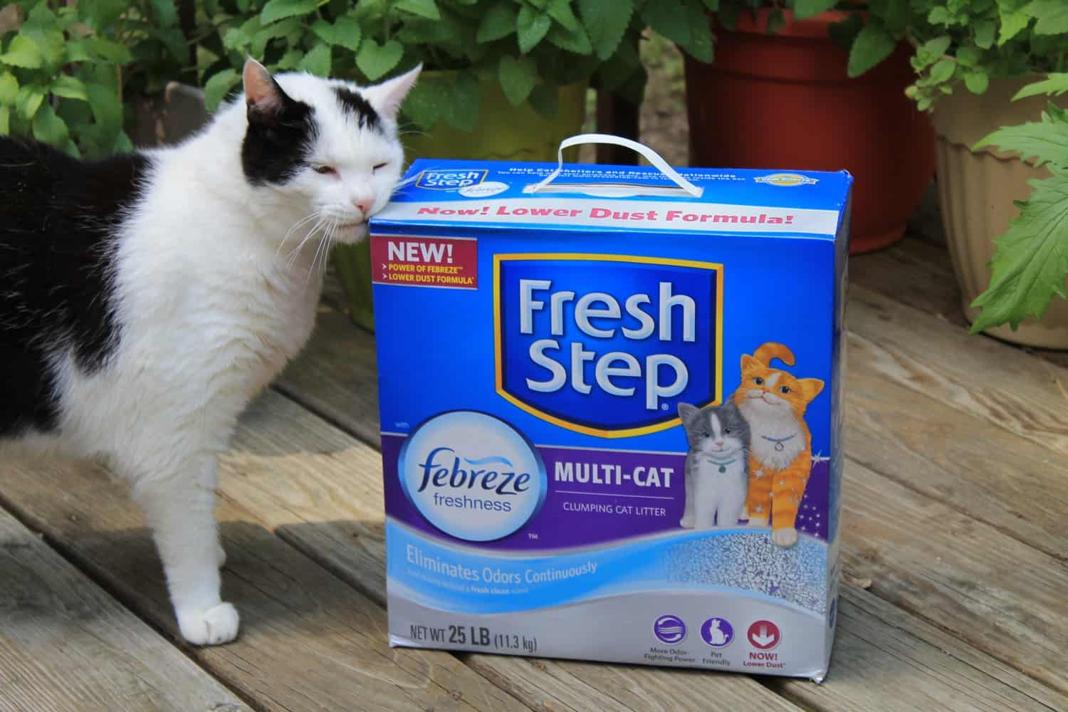 Say Goodbye to Stinky Litter Box Odors for 10 Days Straight with #FreshStepFebreze #Unsmellable