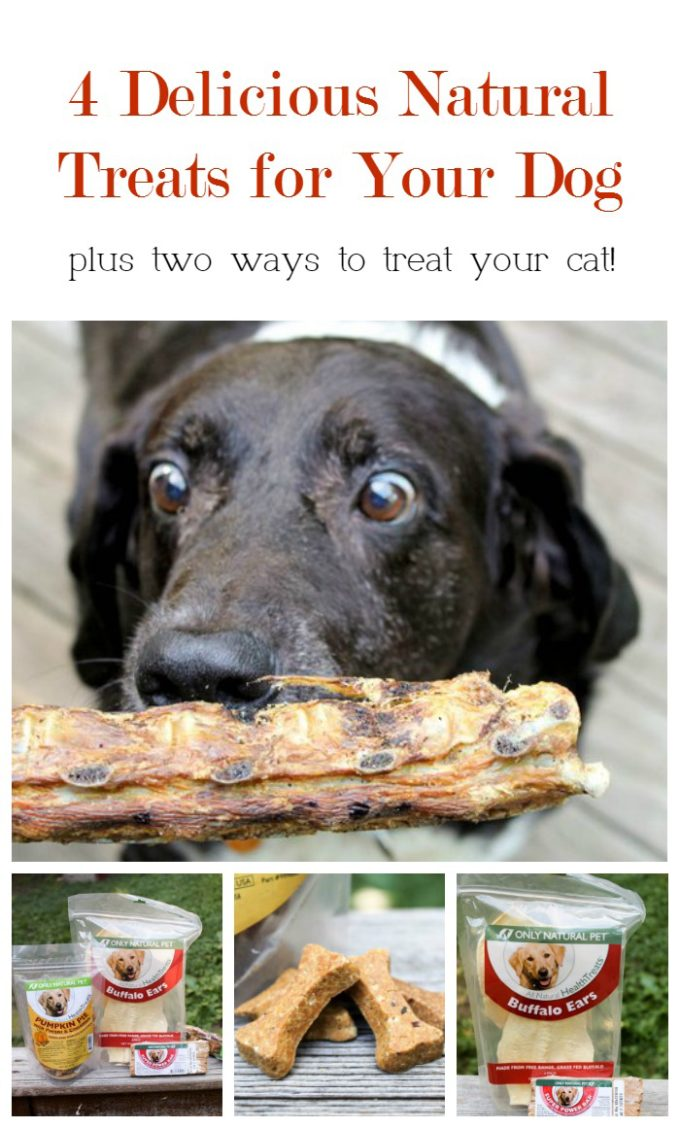 Treat your dog to yummy, all-natural goodies plus check out two ways to take care of your cat's health!