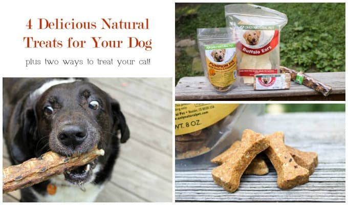 Naturally Wonderful Ways to Treat Your Pet this Fall with Only Natural Pet