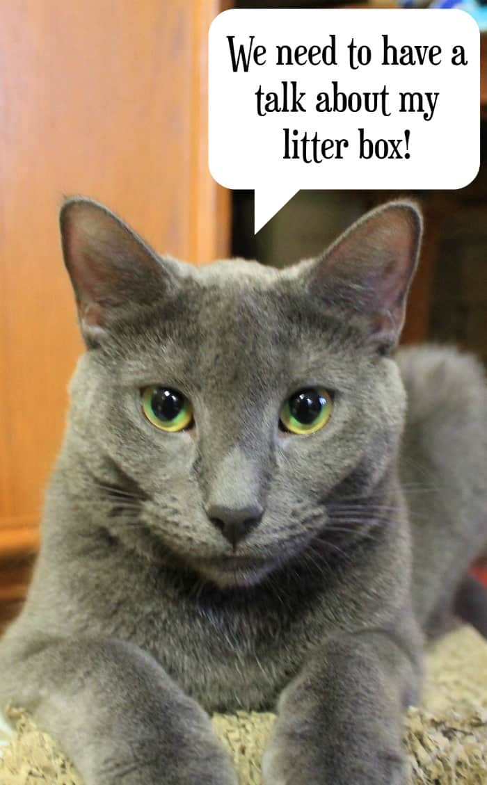 Your cat wants you to know that Fresh Step with the power of Febreze will stop odors for 10 days straight. Listen to your smart cat. Get the #Unsmellable litter!