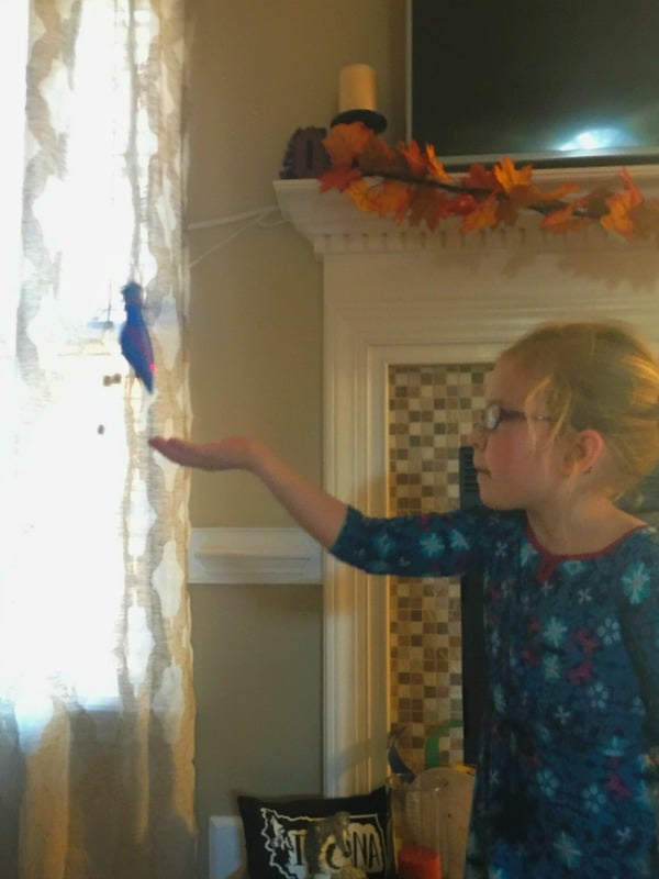 zippi-pets-flying-hummingbird-toy-flying
